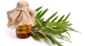 Beneficios de las cremas con esencia de árbol de té australiano