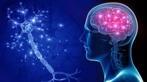 Tres vitaminas neurológicas para el cerebro y la memoria