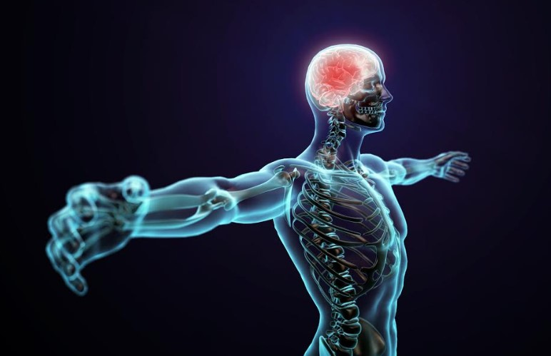 Cómo proteger tu sistema nervioso con vitamina B